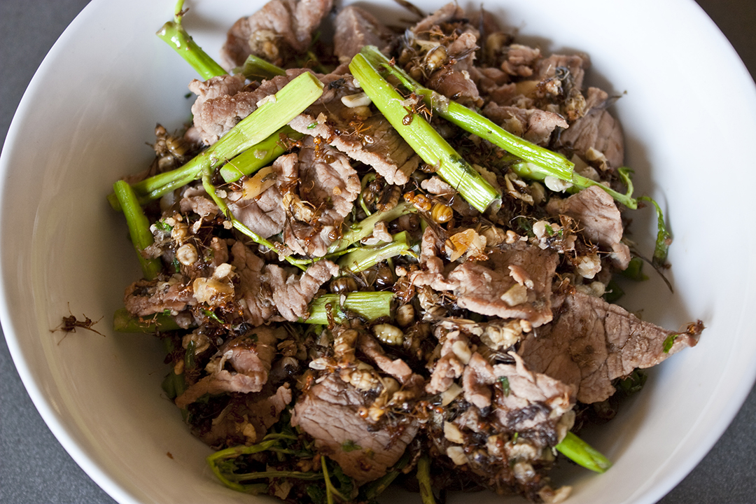 Stir fried beef with tree ants