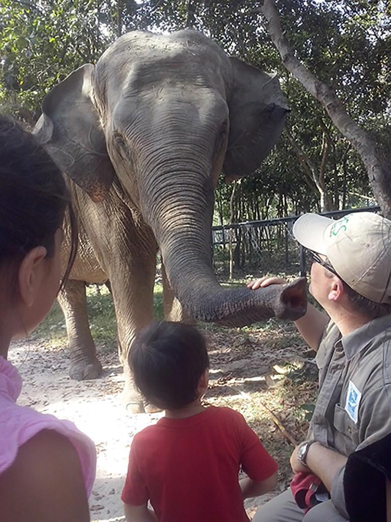 CAM02358 elephant